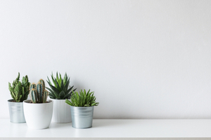 too many indoor plants will increase the level of humidity in your home